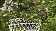 Quelles plantes en guise de brise vue ou en mur végétal? Voici un bouquet d'idées