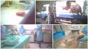 Décapitations, mises à mort illégales, le cauchemar des animaux de laboratoire de la VUB