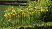 Floralia Brussels à Grand-Bigard