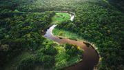 Les forêts secondaires d'Amazonie n'ont absorbé qu'une infime partie de CO2, révèle une étude