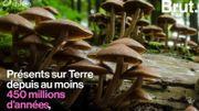 Ils sont sur Terre depuis au moins 450 millions d'années : savez-vous vraiment ce que sont les champignons?
