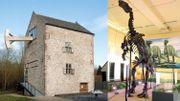 Partez à la découverte des iguanodons... de Bernissart à Bruxelles