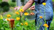 Les fleurs s'invitent en indispensables au potager !