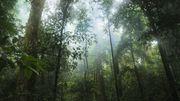 Cédric Vermeulen : pour une gestion raisonnée des forêts africaines