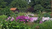 """Aux Pays-Bas : une pépinière de vivace cultivées bio : """"de Hessenhof"""""""