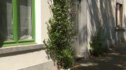 """""""Belles de ma rue"""" : quand la végétation s'invite en ville"""