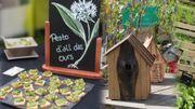 Un festival pour découvrir des plantes comestibles