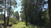 """""""L'Avenue Louise"""" aujourd'hui. La végétation a repris ses droits et les maisons en bois ont disparu."""