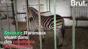 """Une dizaine d'animaux sauvés du """"zoo de l'enfer"""" en Albanie"""