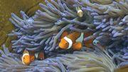 Grande barrière de corail: l'Unesco réclame un nouveau rapport à l'Australie