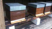 250 apiculteurs élèvent cette race, principalement dans la région de Chimay, mais pas seulement