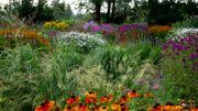 """Maria et Jaap nous dévoilent leur jardin surnommé """"Jakostuin"""""""