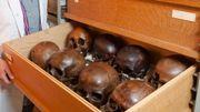 Restitution: HOME, une étude sur les restes humains de nos musées