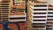Une criée en ligne pour les véritables fraises de Wépion