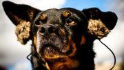 """""""Mutt dogs"""" : le docu qui a du chien"""