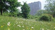 """""""Dans le parc Sobieski à Laeken, au Scheutbos à Molenbeek-Saint-Jean, à Uccle dans le parc Fond'Roy, voire même dans le vaste parc de Woluwe sont maintenues des prairies fleuries d'une grande richesse."""""""