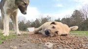 Istanbul bichonne ses chiens et chats errants