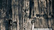 CD de la semaine : Bartok - Mikrokosmos et autres oeuvres par Cédric Tiberghien (Hyperion)