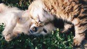 Que faire contre la mauvaise haleine de nos animaux ?