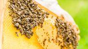 Les bienfaits des produits de la ruche: la cire d'abeille