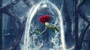 """La rose enchantée sur la première affiche de """"La Belle et la Bête"""""""