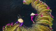 La cueillette des nénuphars sur le delta du Mékong immortalisée dans une magnifique série de photos