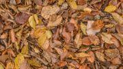 Les feuilles mortes, une ressource pour votre jardin