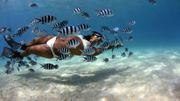 Sous l'océan… Plonger aux Seychelles