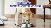 Des substances toxiques dans les croquettes pour chiens