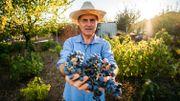 Bonne nouvelle, le vin wallon se porte à merveille… Santé!