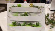 Comment mettre un peu de vert dans sa cuisine