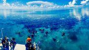 Découvrir le Blue Hole de l'intérieur, un rêve de plongeur, sur les traces de Cousteau ou Darwin.