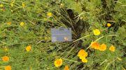 Chaque fiche comporte deux volets : le premier reprend une photographie, le biotope, la répartition géographique et la description  de la plante; le second comprend une rubrique « Tout savoir » qui décrit la plante et sa famille, les confusions, les usages médicinaux et autres, une planche d'herbier et un clin d'œil anecdotique.