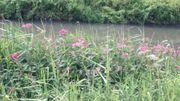 Le long du canal de Mons, à Jemappes