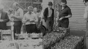 En1971, reportage sur le Festival de la fraise à Wépion