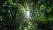 Relaxez-vous en vous immergeant dans l'ambiance d'une forêt à l'autre bout du monde