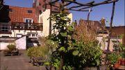 Jardins de rêve : un jardin bourdonnant sur les toits de Bruxelles