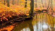 Réinventer les métiers de la forêt, revenir à une forêt plus mixte : c'est une question d'équilibre
