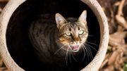 Ce chat coincé au fond d'une canalisation est sauvé et n'a visiblement pas tout compris