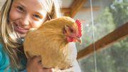 """Les poules ont la """"Cot""""! Quels sont les bons conseils avant d'investir dans un poulailler ?"""