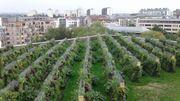 Une ferme/potager pas comme les autres : en milieu urbain et... perchée sur un toit