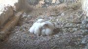 Une petite sieste bien au chaud à Uccle