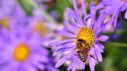 Sauvons nos pollinisateurs !