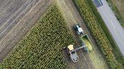 Le Mexique transforme les cactus en biocarburant