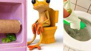 Des grenouilles sortent d'une cuvette de WC… Et il n'y a aucune explication