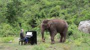 Apaiser les éléphants blessés et aveugles de Thaïlande par la musique classique