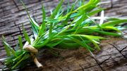 Les vertus de l'estragon, un aromate antioxydant