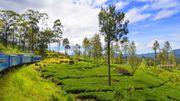Sri Lanka: le visa gratuit est suspendu pour le moment