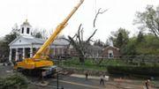 USA: les dernières heures d'un chêne de 600 ans, en version accélérée