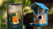 Une mangeoire connectée pour mieux photographier les oiseaux de votre jardin